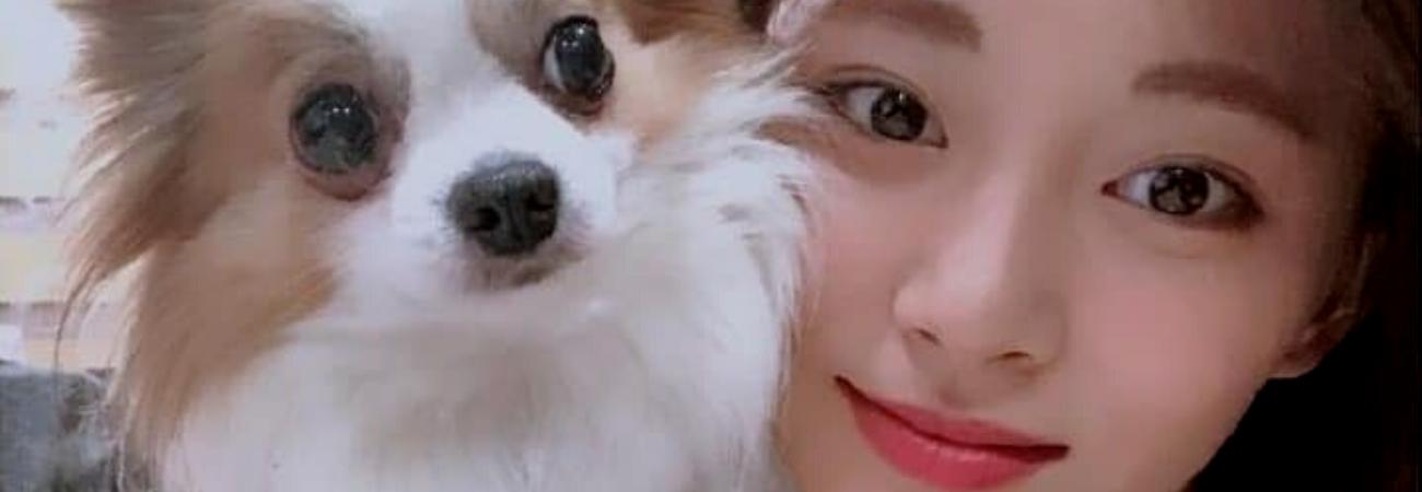 Lamentablemente Gucci, el perro de Tzuyu de TWICE ha fallecido