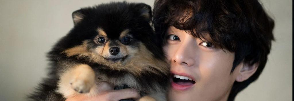 Empresa de alimentos de mascota bajo ataque por utilizar al perro de BTS V, Yeontan, sin permiso y filmarlo con fines promocionales