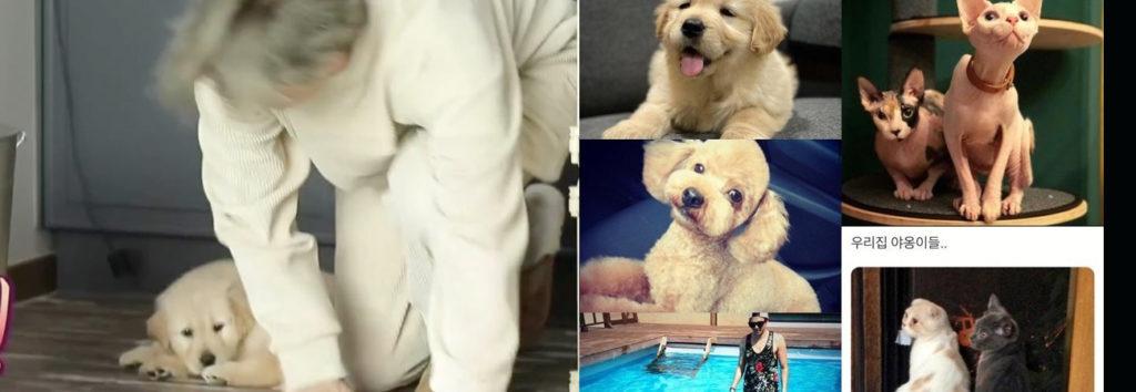 La agencia de Park Eun Suk realiza declaraciones sobre el supuesto maltrato animal