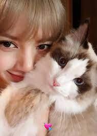 Resultado de imagen para lisa de blackpink con su gato luca