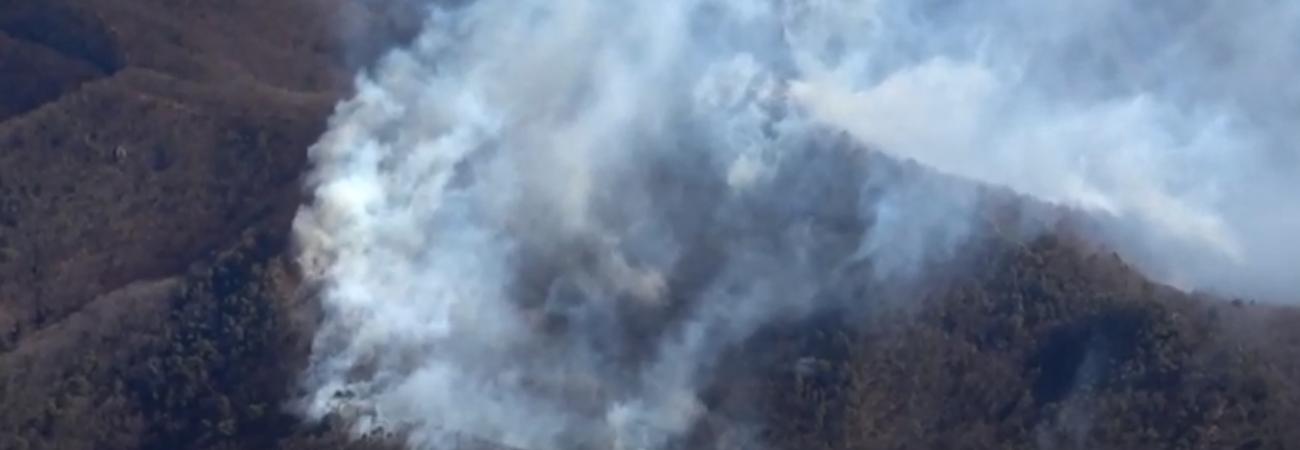 Incendio forestal quema 50 hectáreas al norte de Tokio y sigue extendiéndose