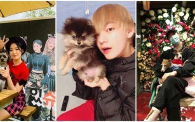 Ídolos de kpop y sus mascotas