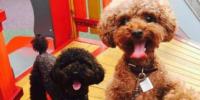 ¡Te recomendamos estos nombres en coreano para tu nueva mascota!